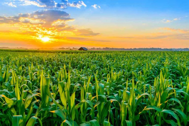 Agriculture 4.0 – Data as the driver.